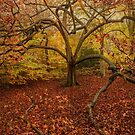 Autumn Colours by Stuart  Gennery