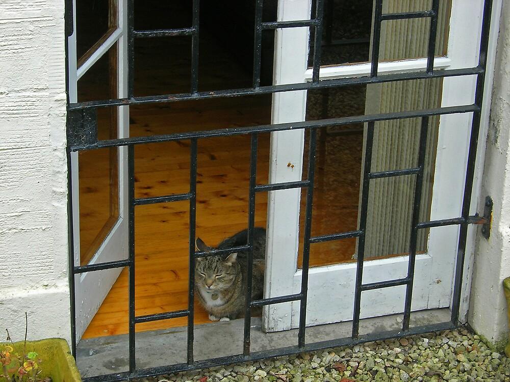 Cat by Christine Leman-Riley