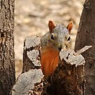 Peek-a-boo! by Richard G Witham