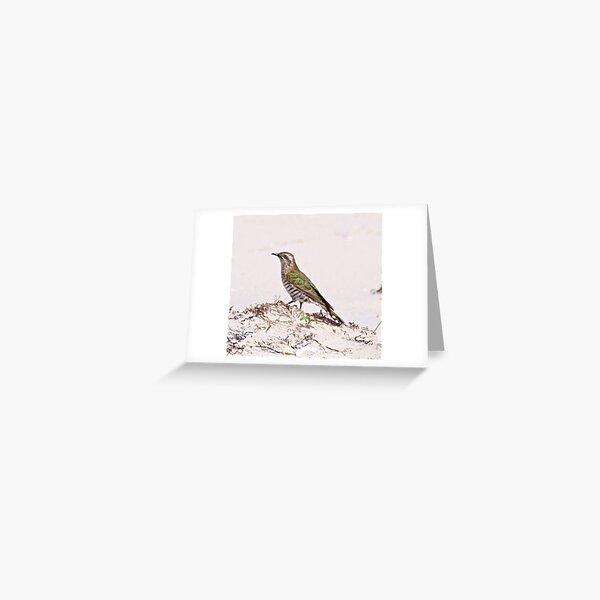 CUCKOO ~ Shining-bronze Cuckoo RHD8H2QT by David Irwin Greeting Card