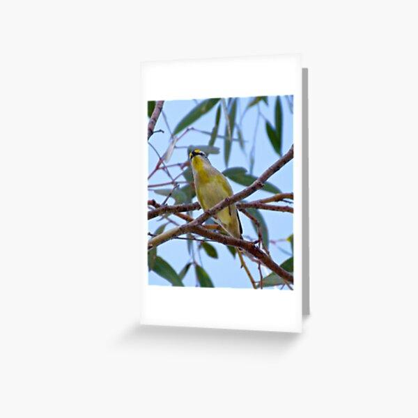 PARDALOTE ~ Striated Pardalote vwLpULVi by David Irwin Greeting Card