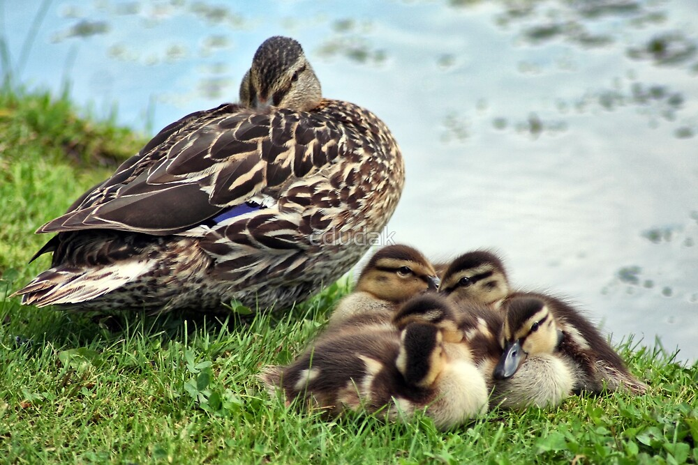 Mom And Her Babies by cdudak