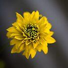 Yellow flower by Yana Art