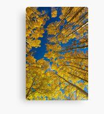 Sky Aspens Canvas Print