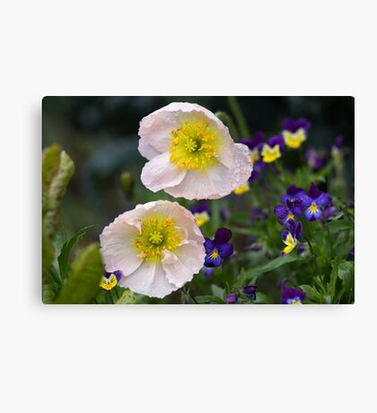 Poppies come in Twos Canvas Print