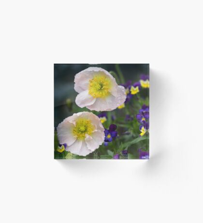 Poppies come in Twos Acrylic Block