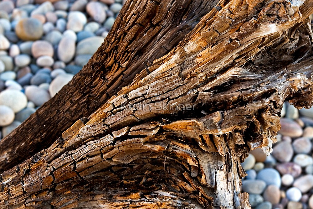 Driftwood Textures by Kevin Skinner