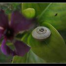 slumbering snail by chen cohen