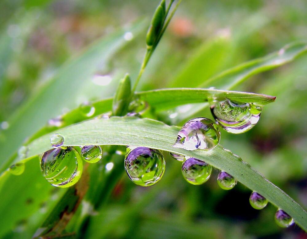 At Grass Level by Ann  Palframan