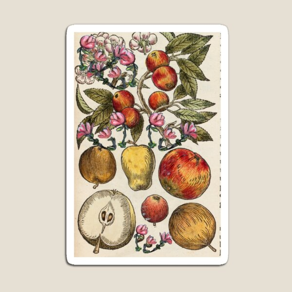 Crazy Fruit And Blooms Magnet