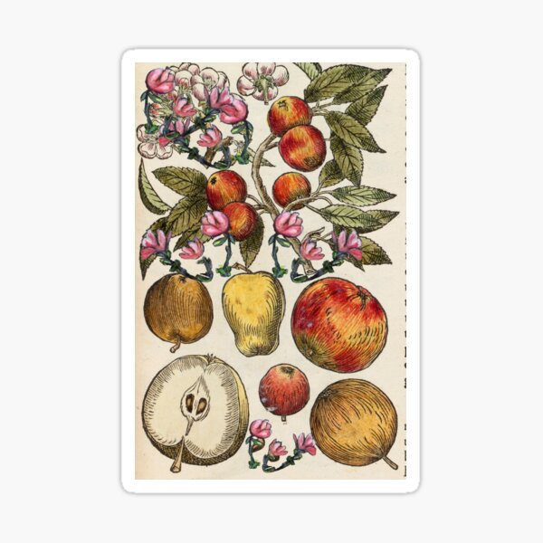 Crazy Fruit And Blooms Sticker