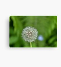 One dandelion growing in the woods Canvas Print