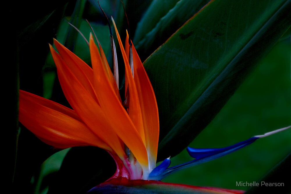 Flower in the Dark by Michelle Pearson