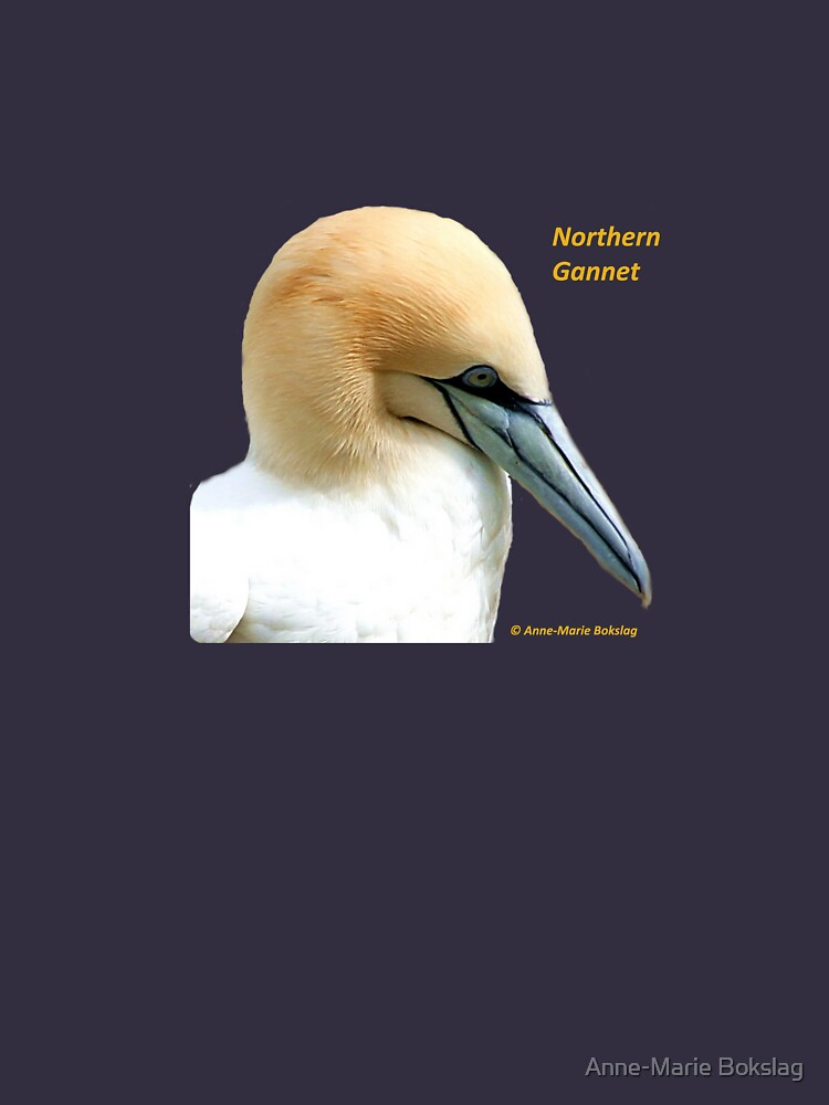 Northern Gannet by amb1946