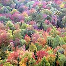 Colors of Fall by David Lee Thompson