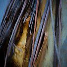 The Tree Bark Collection # 36 - The Magic Tree by Philip Johnson