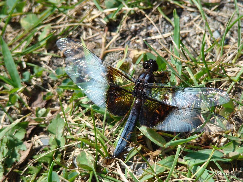 Dragonfly R&R  by VMercado