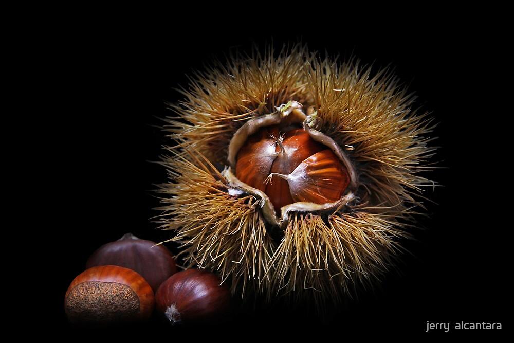 Chestnut by jerry  alcantara