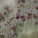 Wayward Weeds © Vicki Ferrari by Vicki Ferrari