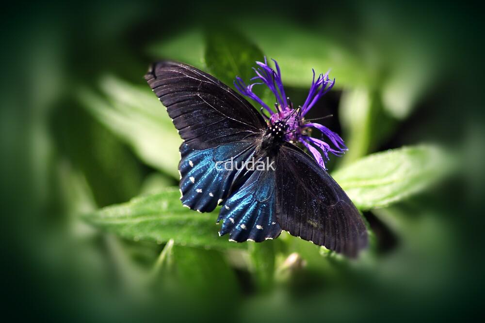 Black and Blue Beauty by cdudak