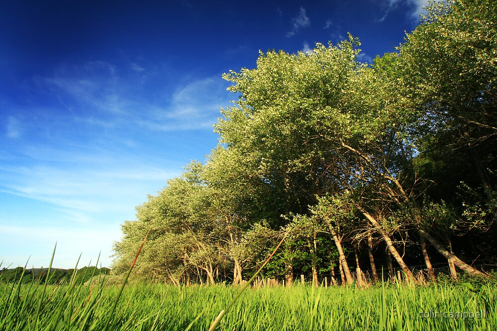 Beaufort trees by colin campbell