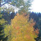 Autumn's Here by mwmclaren