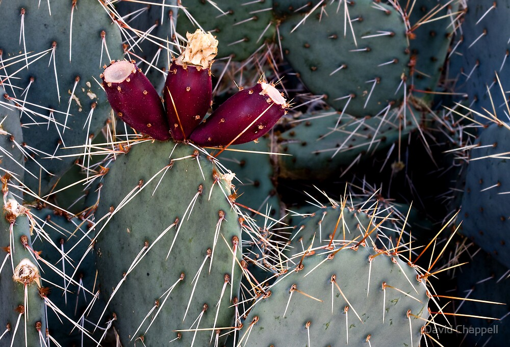 Cactus Color by David Chappell