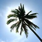 Palm tree in the sun by Timoteo Delgado