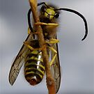 Yellow Jacket by main1