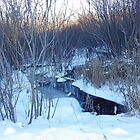 Natural Beauty Of Winter                                 Pentax X-5 16 MP by TKUsitalo