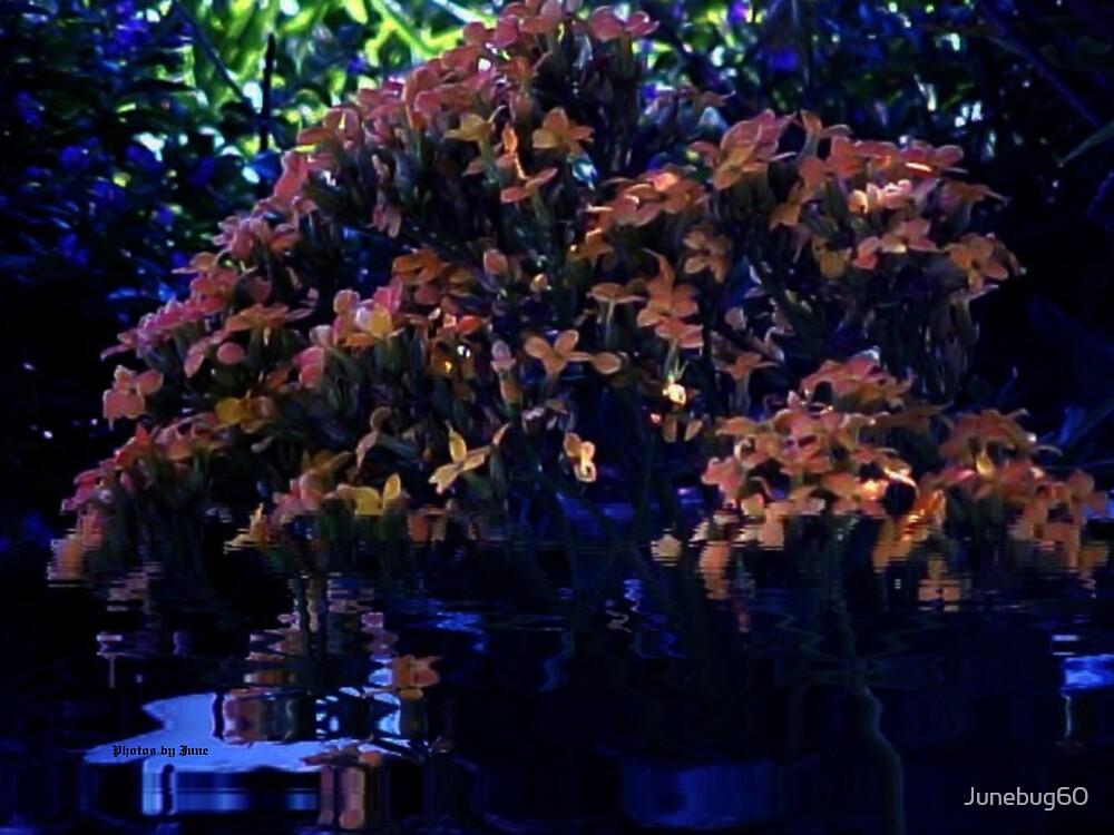 Night Fall by Junebug60