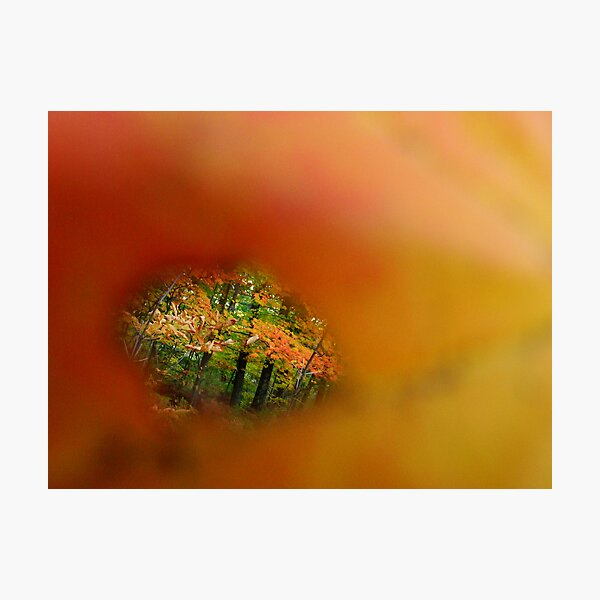 Quality of Beauty Photographic Print