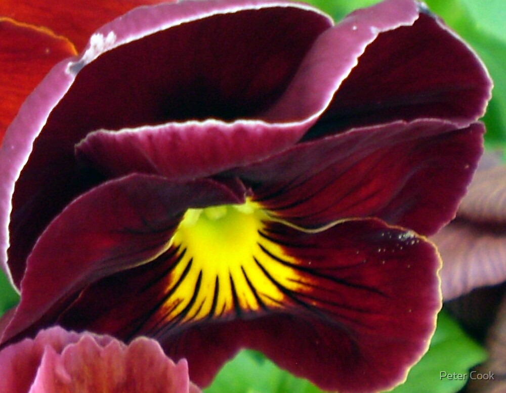 pretty flower by Peter Cook