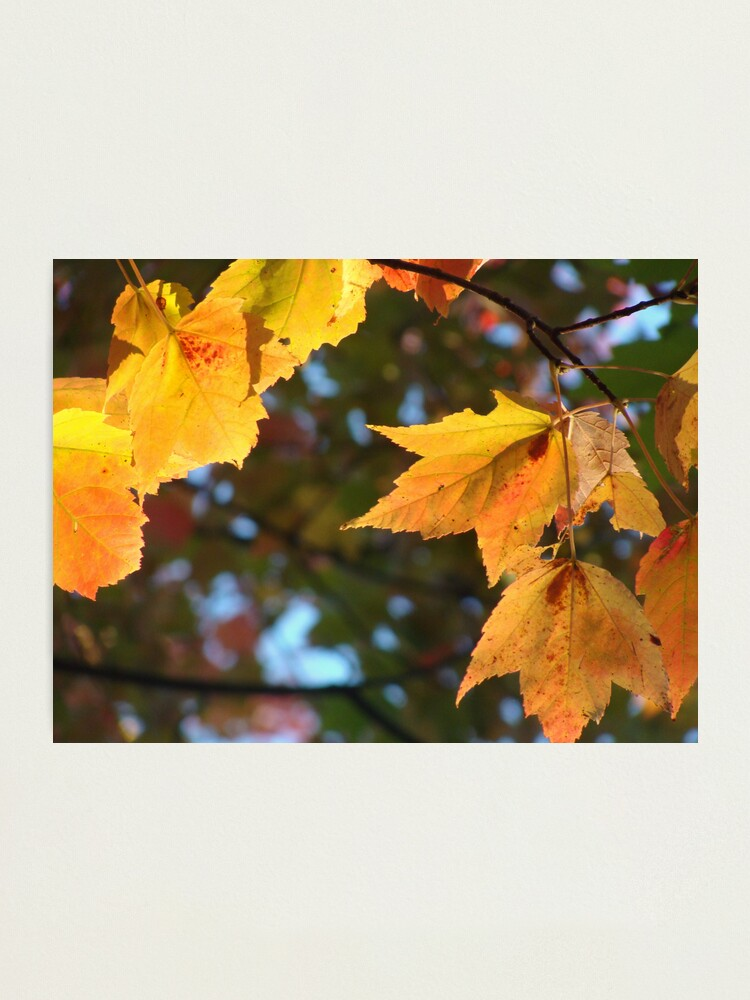 Alternate view of Delicious Autumn Photographic Print