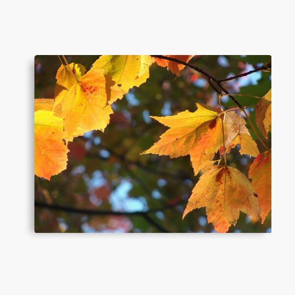 Delicious Autumn Canvas Print
