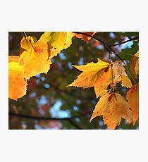 Delicious Autumn Photographic Print