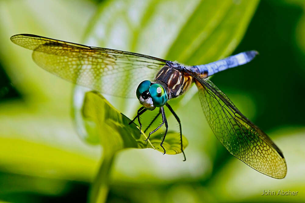 Dragonfly by John Absher