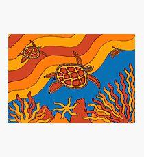 Goorlil - (turtle) lalin season (summer) Photographic Print