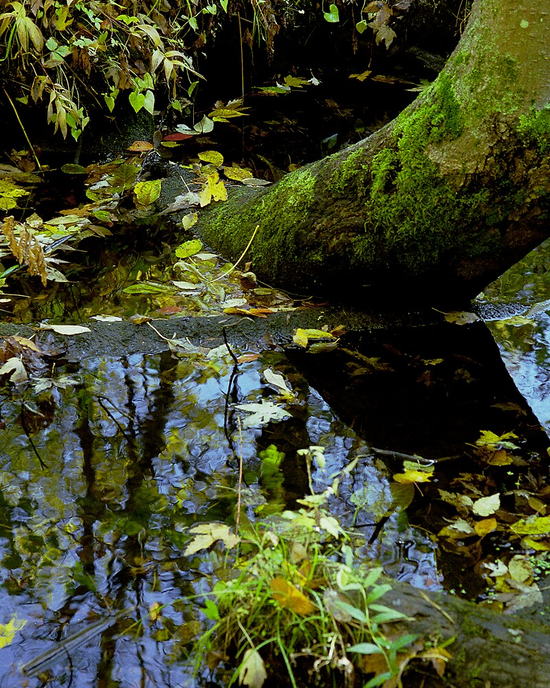Mossy Log and Reflection by Jeff Harris