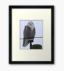 Perched High Above Framed Print
