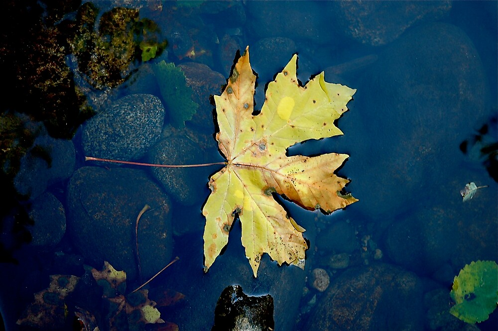 Sign of Fall by clare scott