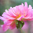 Painted Pink Dahlia  by Anita Pollak