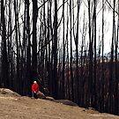 Devastation after Feb. 7 West Gippsland bushfires  by Bev Pascoe