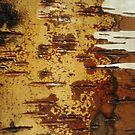 inside out white birch by yvesrossetti