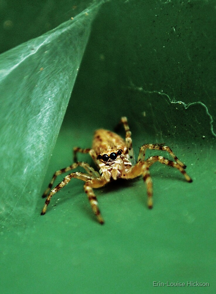I hate spiders.. by Erin-Louise Hickson