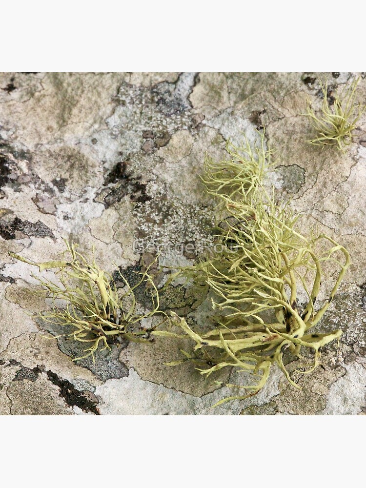 Lichen on tomb in Shalwy Valley, Kilcar, Donegal by VeryIreland