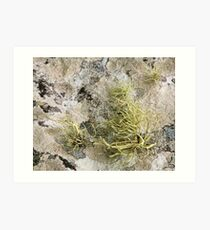 Lichen on tomb in Shalwy Valley, Kilcar, Donegal Art Print