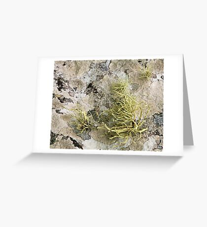 Lichen on tomb in Shalwy Valley, Kilcar, Donegal Greeting Card