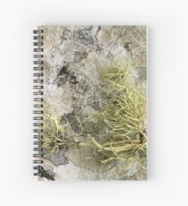 Lichen on tomb in Shalwy Valley, Kilcar, Donegal Spiral Notebook