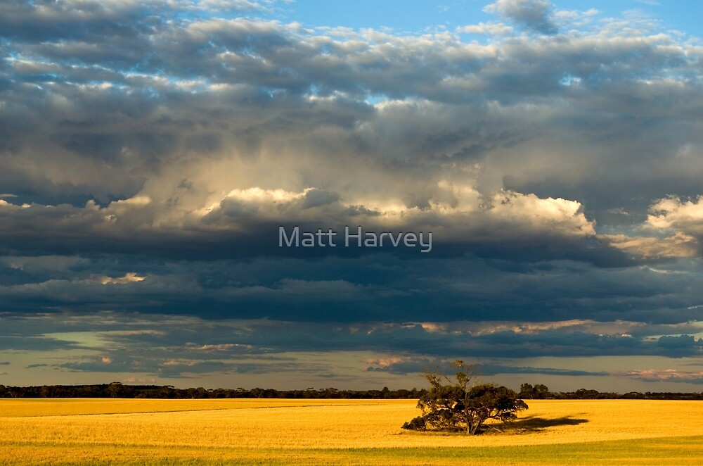 Golden fields by Matt Harvey